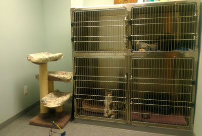 picture of Old York Veterinary cat ward