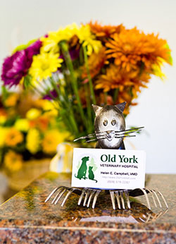 Picture of Old York Vet business card and flowers.